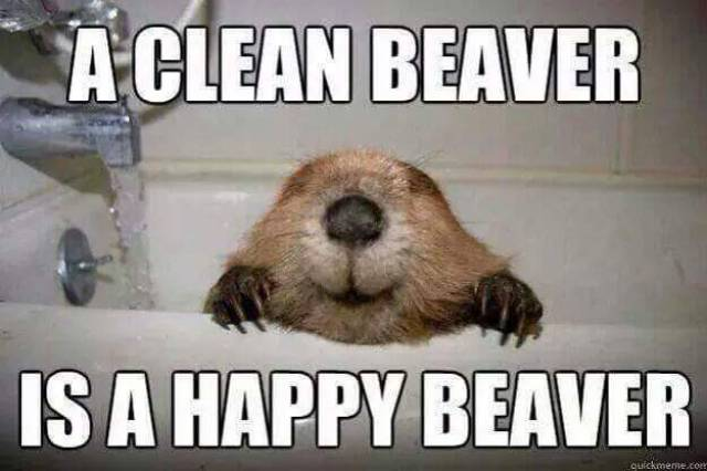 A clean beaver is a happy beaver.