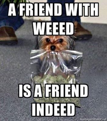 A friend with weed is a friend indeed.
