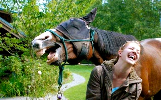 A Woman And Her Horse Have A Great Laugh Together. It Must Have Been A Good Joke.