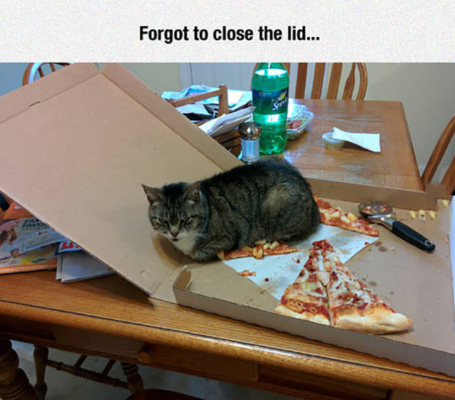 Always close the pizza box when cats are present.