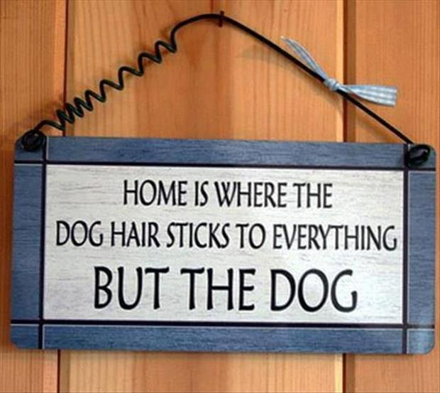 Any Dog Owner Can Tell You This Sign Is Absolutely Correct.