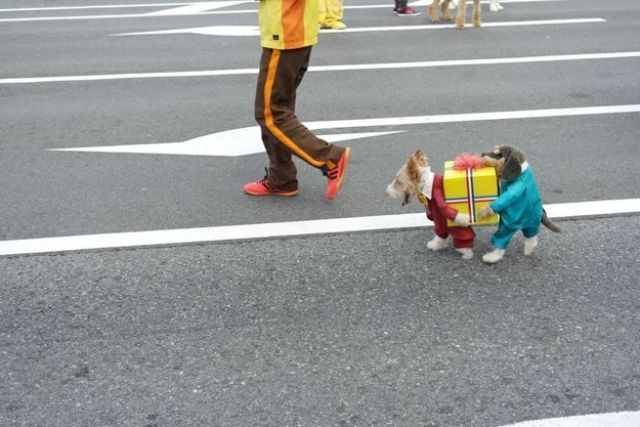 Best dog costume ever?