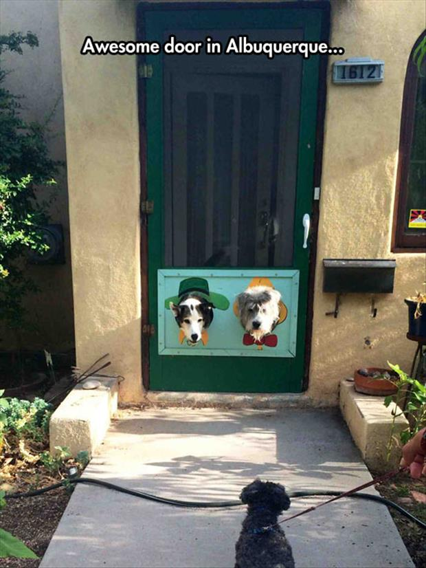 Best Front Door Ever And I Am Sure Those Dogs Love It Too