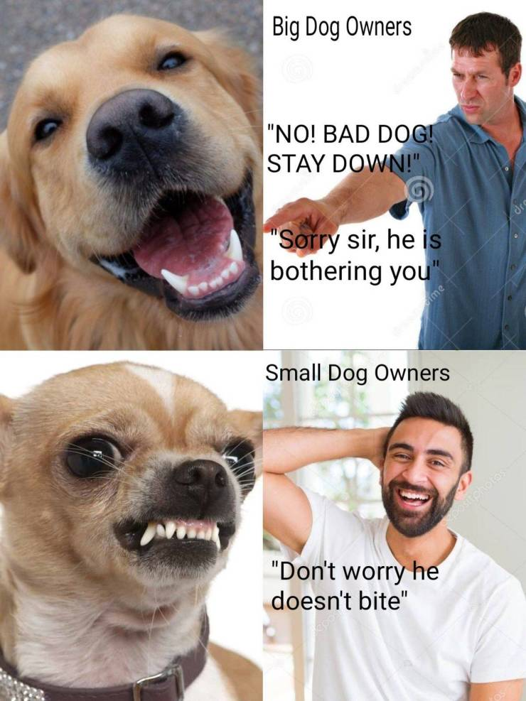 Big dog owners vs. Small dog owners