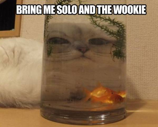 Bring me Solo and the Wookie.