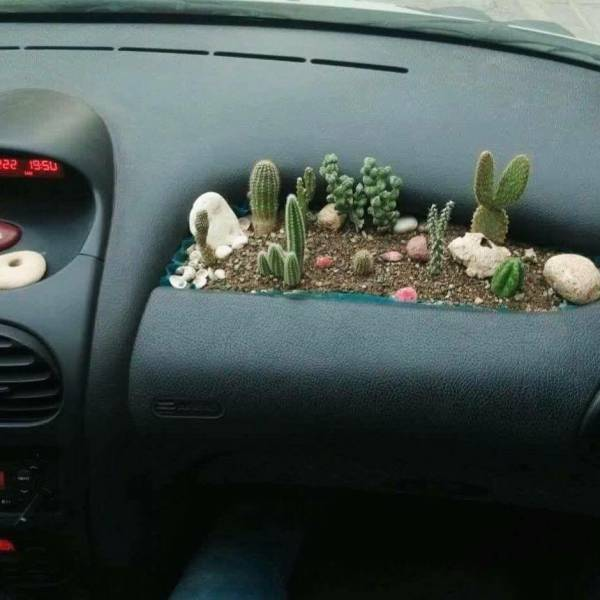 Cactus garden for the dashboard in your car.