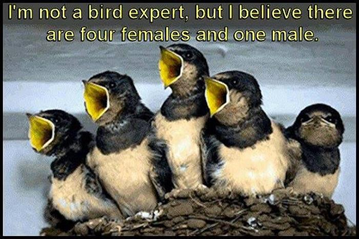 Can you tell which birds are male or female?