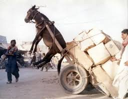 This man overloaded his donkey like a real jackass.