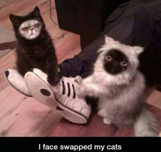 Cat face swap.
