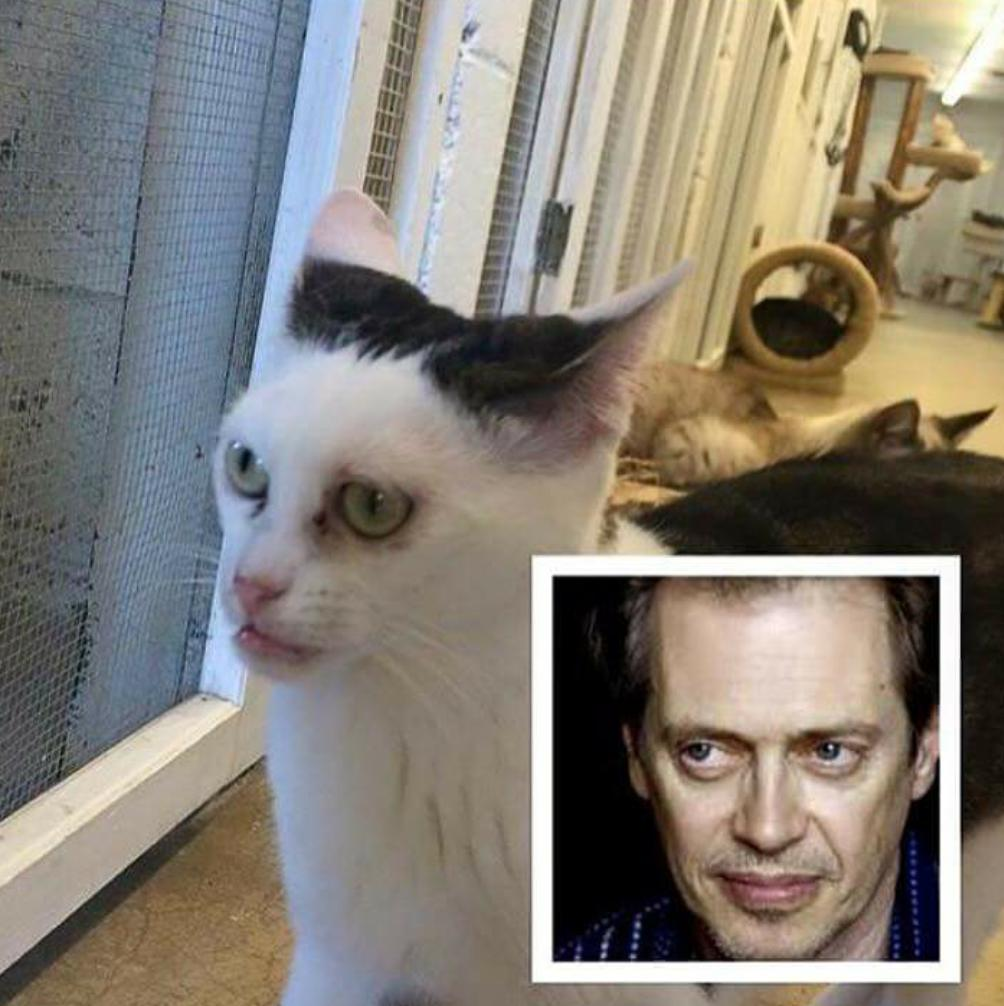 Cat With Steve Buscemi S Face