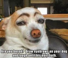 Countless hours can be had laughing while watching your dog with painted eyebrows stare at you like you are crazy
