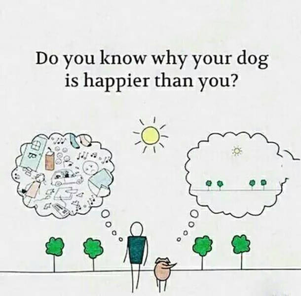 Do you know why your dog is happier than you?