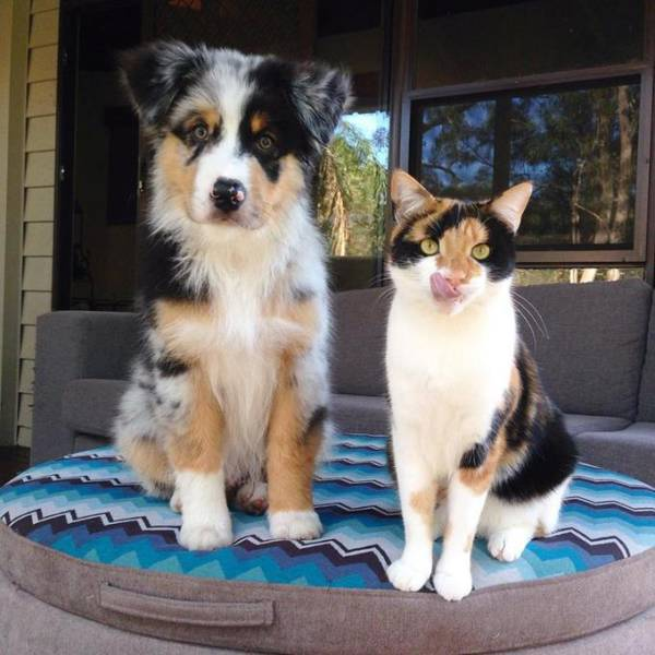 Dog and cat are definitely brothers from another mother.