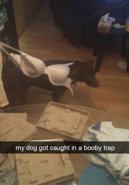 Dog got caught in a booby trap.