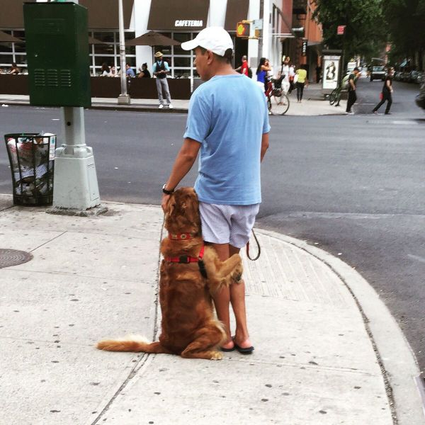Dog is not afraid to hug in public.