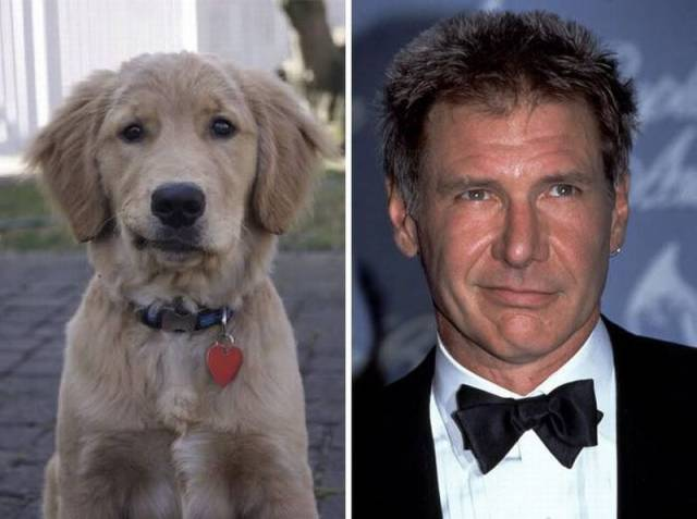 Dog looks just like Harrison Ford.
