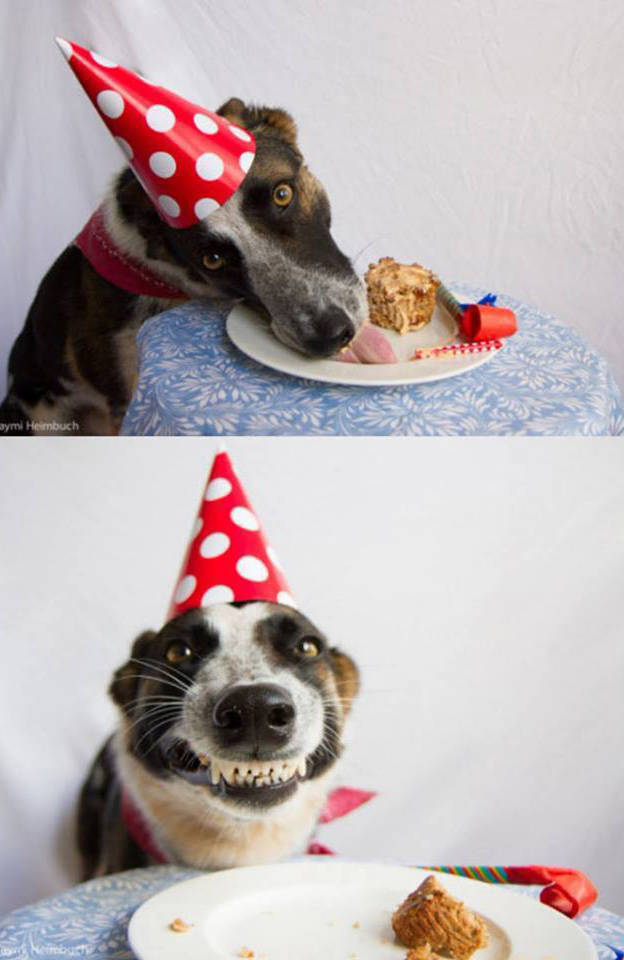 Dog loves his birthday cake.