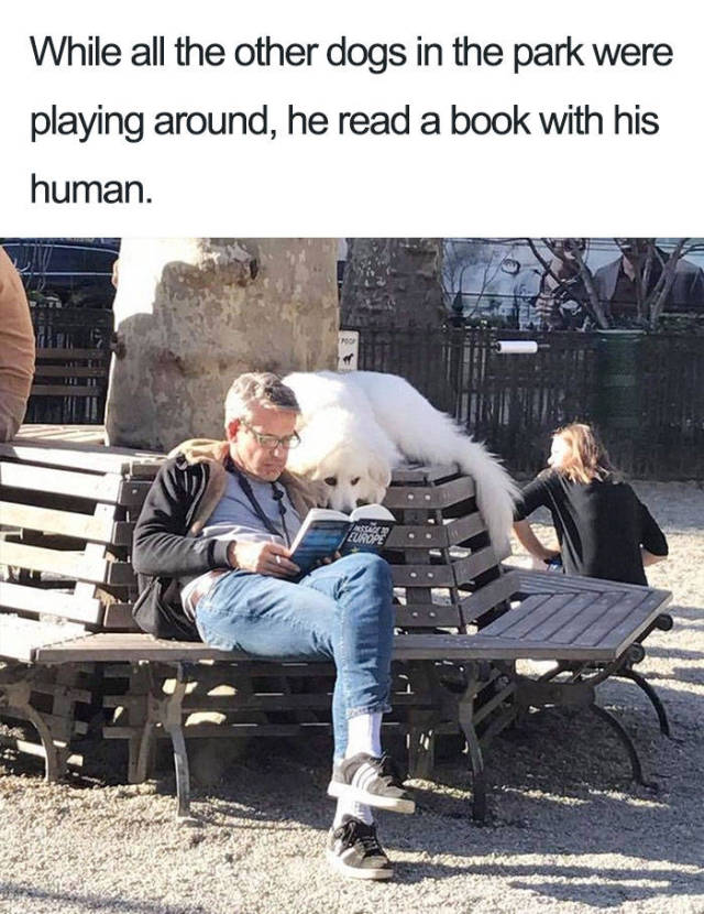Dog loves to read.