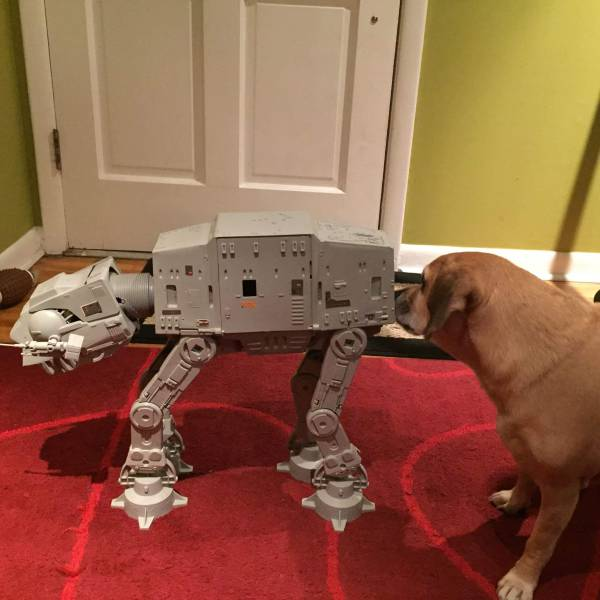 Dog saying hello to an AT-AT Walker from Star Wars.