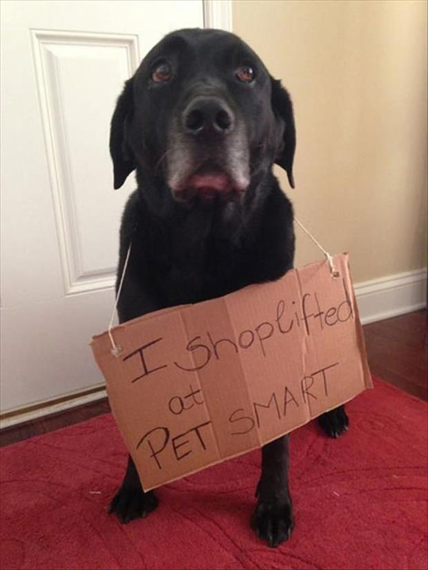 Dog steals then confesses the truth