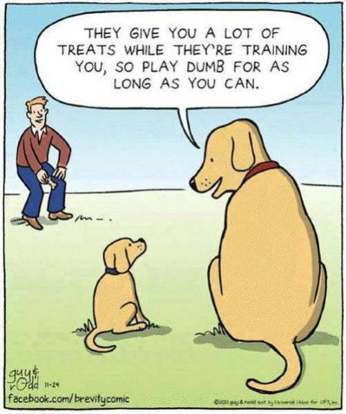 The truth about dog training.