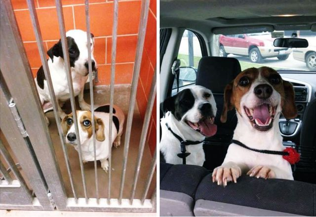 Dogs before and after being rescued from the animal shelter.
