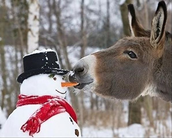 Don't be a jackass and eat the poor Snowman's nose
