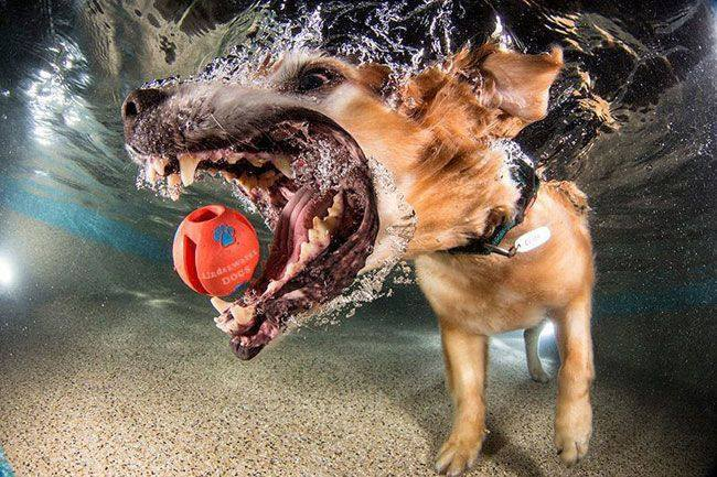Amazing picture of dog under water fetching a ball