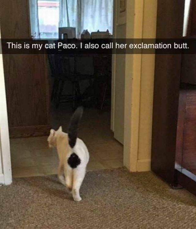 Cat nicknamed exclamation butt for a good reason.