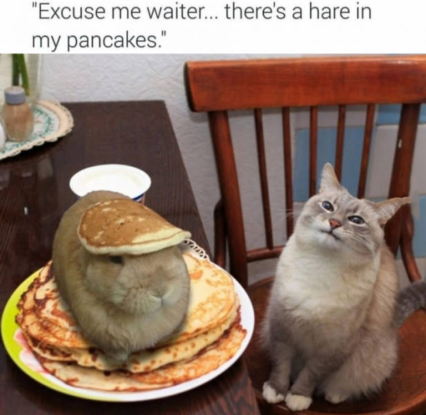 Excuse me waiter, there's a hare in my pancakes.