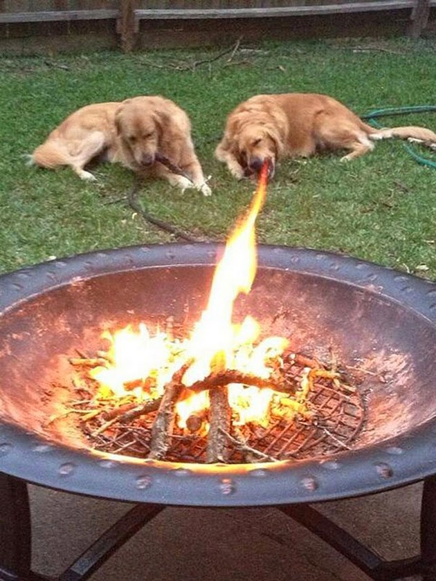 Fire Breathing Dog Spits Huge Flames From It's Mouth.......Or Maybe It's Just The Camera Angle.