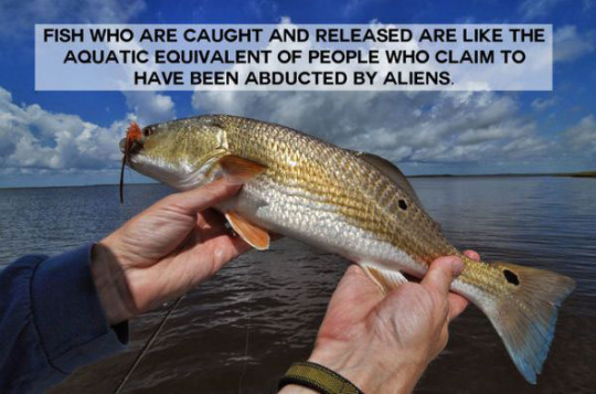 Fish that are caught and released are like people who claim to have been abducted by aliens.