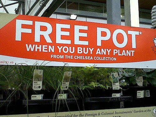 Free Pot and not even a line. What a deal!