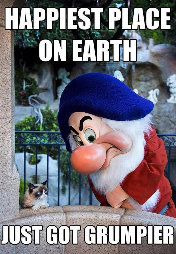 Grumpy Cat Visits Disneyland And Finally Finds Someone He Can Relate To.