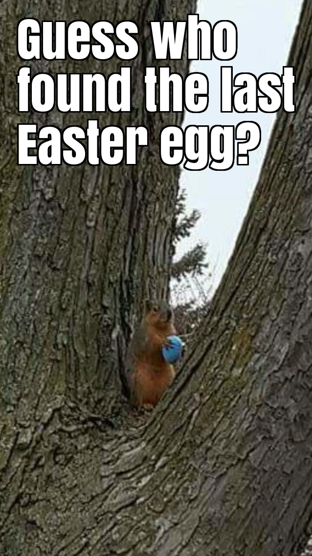 Guess who found the last Easter egg?