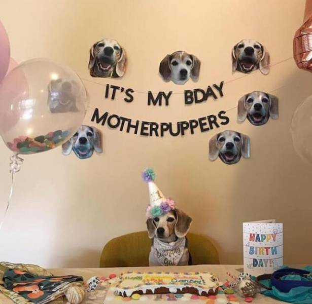 Happy birthday doggo!