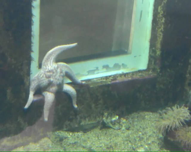 Starfish hanging out at SpongeBob's house.
