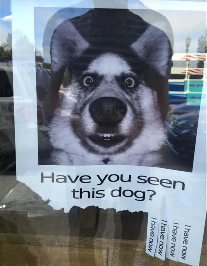 Have you seen this dog?