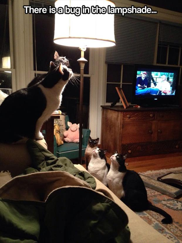 Hours of entertainment is to be had by watching cats stare at a bug in a lamp shade.