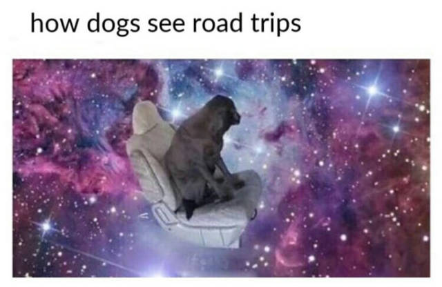 How dogs see road trips.
