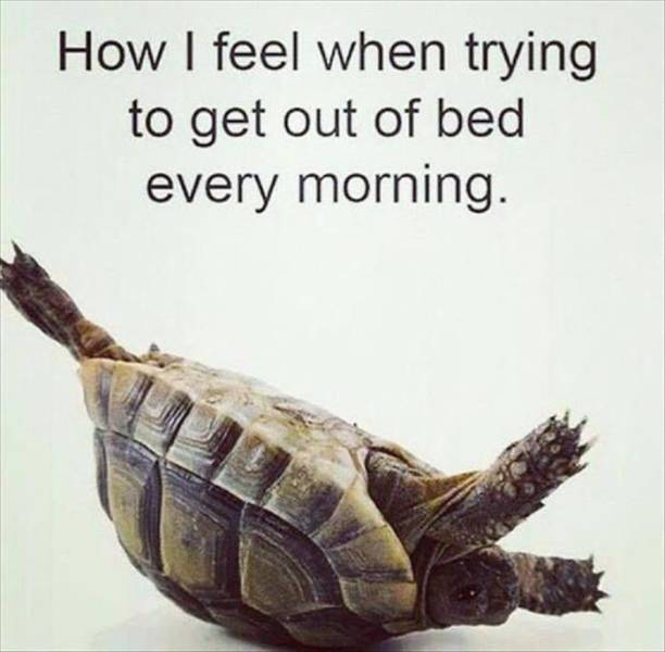 How I feel when trying to get out of bed every morning.