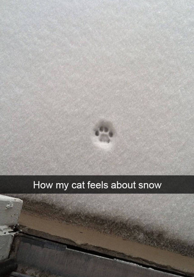 How my cat feels about snow.