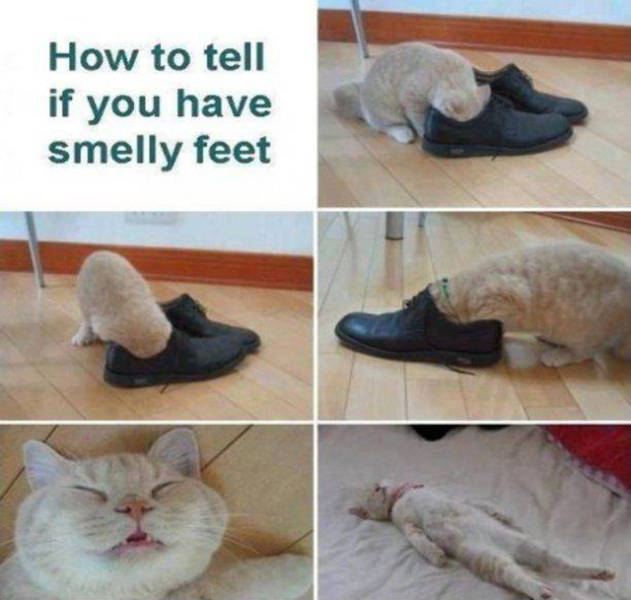How to tell if you have smelly feet.