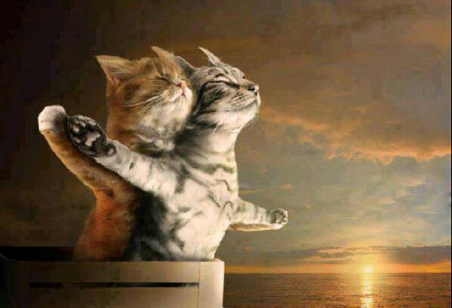 If the actors in the movie Titanic were cats.