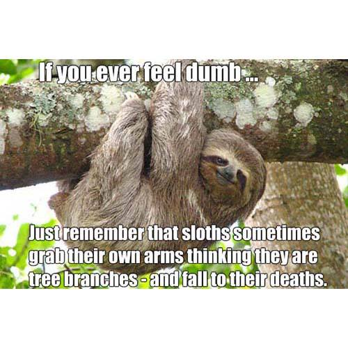 If You Ever Do Something That You Think Is Really Dumb Don't Worry It Could Be Worse. You Could Be A Sloth.