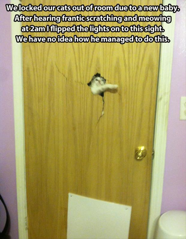 If you ever hear your cat scratching your door to get in it is a good idea to open it otherwise this could happen to you.