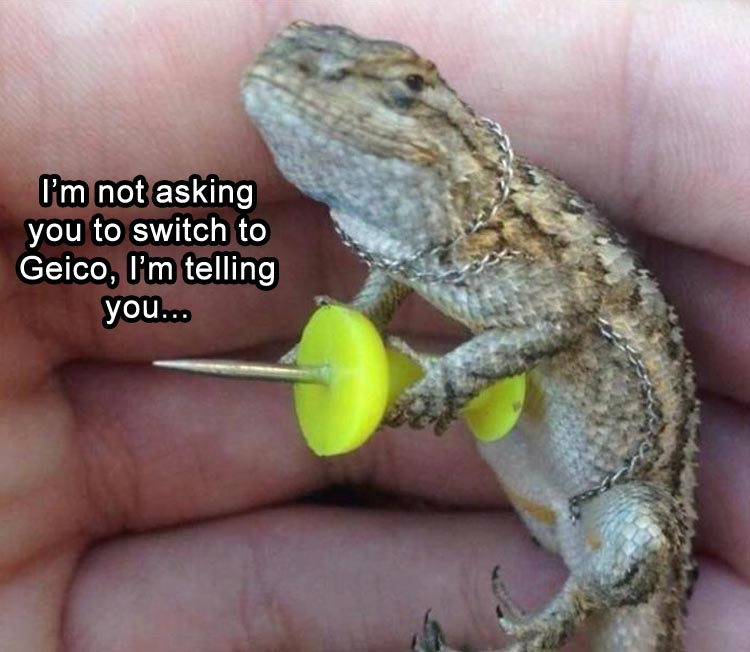 I'm not asking you to switch to Geico, I'm telling you.