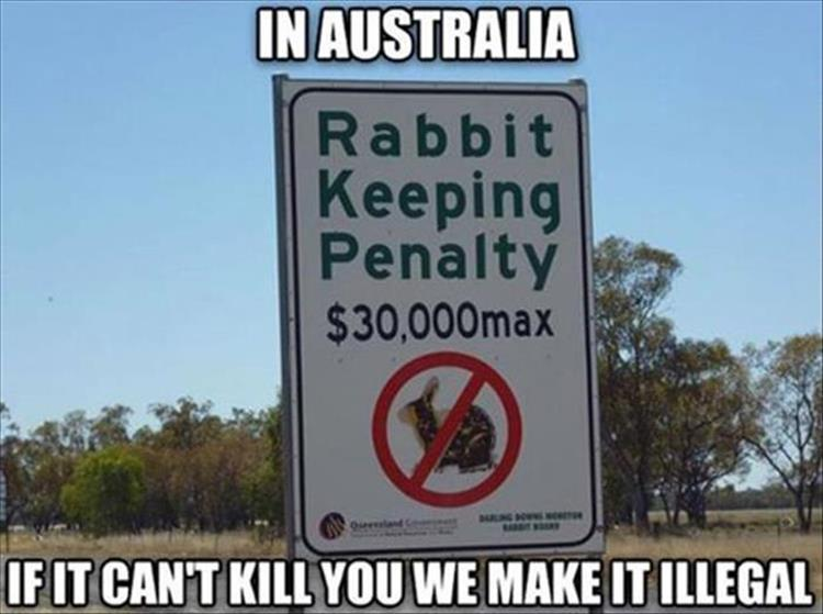 In Australia, if it can't kill you, we make it illegal.