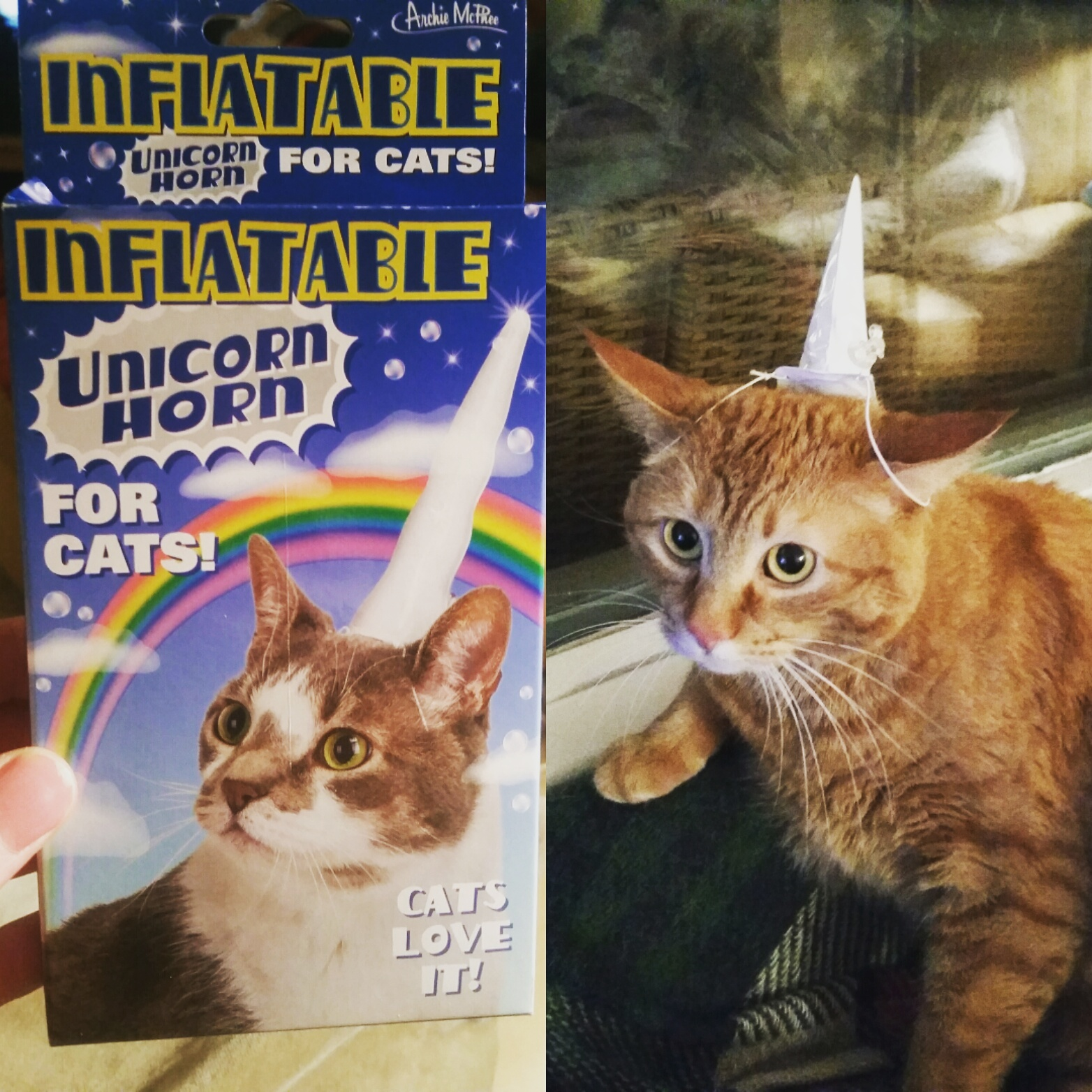 Inflatable unicorn horn for cats. This cat really seems to love it, just like the package says.