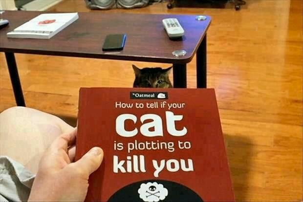 It Might Be A Good Idea To Read This Book If Your Cat Looks At You Funny